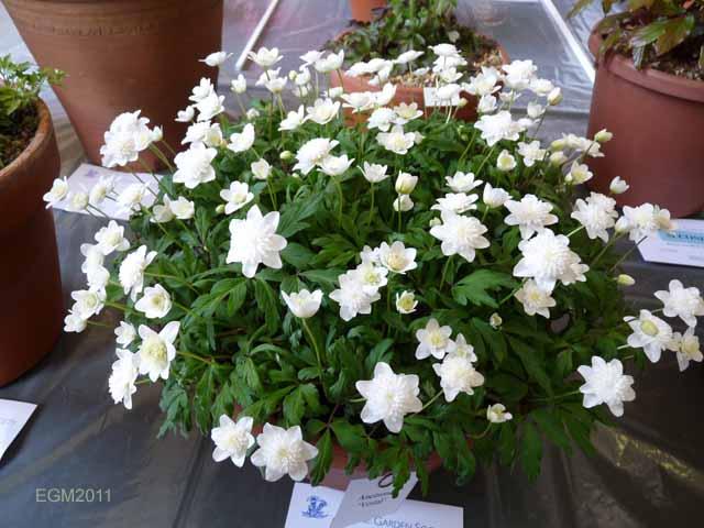 Букеты из цветов Уфа
